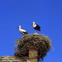 Brandenburg: Storchennest im Ruppiner Land - © Brandenburg TMB