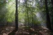 Fläming Lutherstadt Wittenberg Naturpark_Geopark Deutschland Ausflugsziele Freizeit Urlaub Reisen