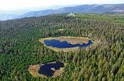 Hochmoorgebiet Kaltenbronn Gernsbach Naturpark_Geopark Deutschland Ausflugsziele Freizeit Urlaub Reisen