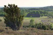 Lüneburger Heide Lüneburg Naturpark_Geopark Deutschland Ausflugsziele Freizeit Urlaub Reisen
