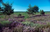 Niederlausitzer Heidelandschaft Elsterwerda Naturpark_Geopark Deutschland Ausflugsziele Freizeit Urlaub Reisen