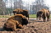 Nossentiner/Schwinzer Heide Karow Naturpark_Geopark Deutschland Ausflugsziele Freizeit Urlaub Reisen