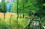 Rothaargebirge Winterberg Naturpark_Geopark Deutschland Ausflugsziele Freizeit Urlaub Reisen