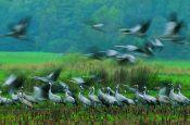 Lauenburgische Seen Ratzeburg Naturpark Deutschland Ausflugsziele Freizeit Urlaub Reisen