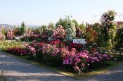 Europa-Rosarium Sangerhausen Park Deutschland Ausflugsziele Freizeit Urlaub Reisen