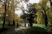 Schlosspark Luisium Dessau Park Deutschland Ausflugsziele Freizeit Urlaub Reisen