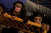 Leintalzoo Schwaigern Zoo_Tierpark Deutschland Ausflugsziele Freizeit Urlaub Reisen