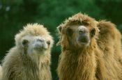Mundenhof Naturerlebnispark Freiburg Zoo_Tierpark Deutschland Ausflugsziele Freizeit Urlaub Reisen