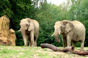 Opel-Zoo Kronberg Zoo_Tierpark Deutschland Ausflugsziele Freizeit Urlaub Reisen