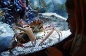 Sea Life Dresden Dresden Zoo_Tierpark Deutschland Ausflugsziele Freizeit Urlaub Reisen