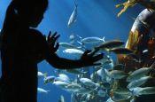 Sea Life München Zoo_Tierpark Deutschland Ausflugsziele Freizeit Urlaub Reisen