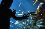 Sea Life Oberhausen Zoo_Tierpark Deutschland Ausflugsziele Freizeit Urlaub Reisen