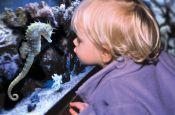 Sea Life Speyer Speyer Zoo_Tierpark Deutschland Ausflugsziele Freizeit Urlaub Reisen