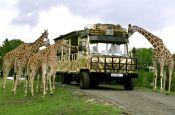 Serengeti-Park Hodenhagen Zoo_Tierpark Deutschland Ausflugsziele Freizeit Urlaub Reisen