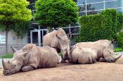 Thüringer Zoopark Erfurt Zoo_Tierpark Deutschland Ausflugsziele Freizeit Urlaub Reisen