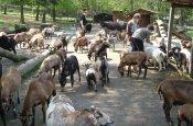 Tierpark Bretten Bretten Zoo_Tierpark Deutschland Ausflugsziele Freizeit Urlaub Reisen