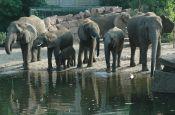 Tierpark Friedrichsfelde Berlin Zoo_Tierpark Deutschland Ausflugsziele Freizeit Urlaub Reisen