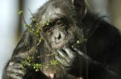 Tierpark Nordhorn Zoo_Tierpark Deutschland Ausflugsziele Freizeit Urlaub Reisen