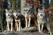Wildpark Bad Mergentheim Zoo_Tierpark Deutschland Ausflugsziele Freizeit Urlaub Reisen