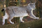 Wildpark Pforzheim Zoo_Tierpark Deutschland Ausflugsziele Freizeit Urlaub Reisen
