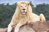 Zoo, Safari- und Hollywoodpark Stukenbrock Zoo_Tierpark Deutschland Ausflugsziele Freizeit Urlaub Reisen