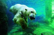 Zoo am Meer Bremerhaven Zoo_Tierpark Deutschland Ausflugsziele Freizeit Urlaub Reisen
