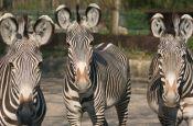 Zoologischer Garten Augsburg Zoo_Tierpark Deutschland Ausflugsziele Freizeit Urlaub Reisen