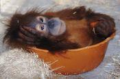 Zoologischer Garten Dresden Zoo_Tierpark Deutschland Ausflugsziele Freizeit Urlaub Reisen