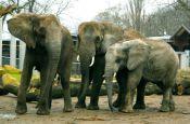 Zoologischer Garten Halle/Saale Zoo_Tierpark Deutschland Ausflugsziele Freizeit Urlaub Reisen