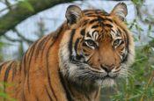 Zoologischer Garten Heidelberg Zoo_Tierpark Deutschland Ausflugsziele Freizeit Urlaub Reisen