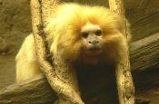Zoologischer Garten Landau/Pfalz Zoo_Tierpark Deutschland Ausflugsziele Freizeit Urlaub Reisen