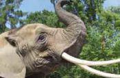 Zoologischer Garten Rostock Zoo_Tierpark Deutschland Ausflugsziele Freizeit Urlaub Reisen