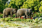 Zoologischer Garten Wilhelma Stuttgart Zoo_Tierpark Deutschland Ausflugsziele Freizeit Urlaub Reisen