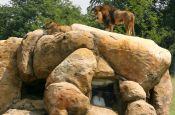 Zoologischer Garten Wuppertal Zoo_Tierpark Deutschland Ausflugsziele Freizeit Urlaub Reisen